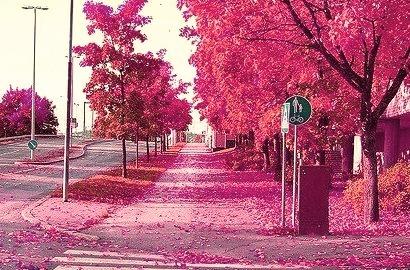 Autumn Red, Denmark