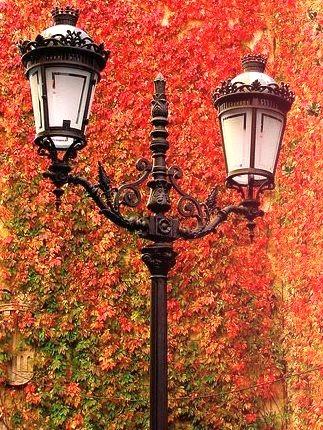 Autumn Lanterns, Devonshire, England