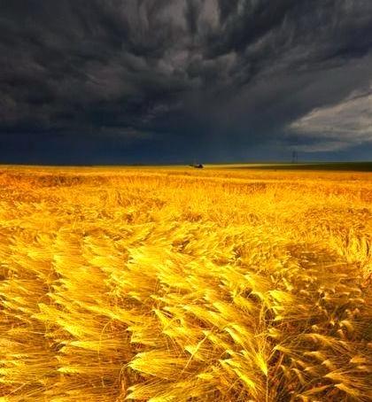 Coming Storm, Barley Field, Germany