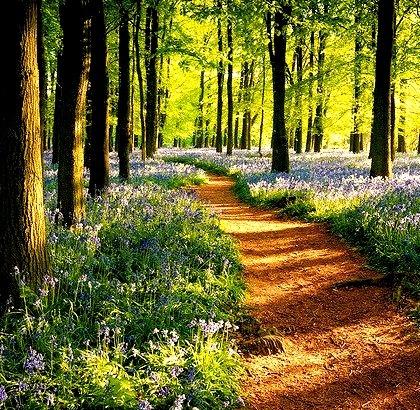Dockey Wood, Ringshall, England