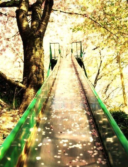 Cherry Blossom Slide, Sakura, Japan