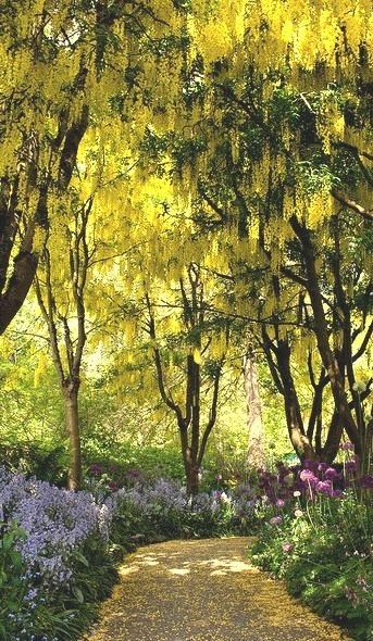 The golden path at VanDusen Botanical Garden in Vancouver, Canada